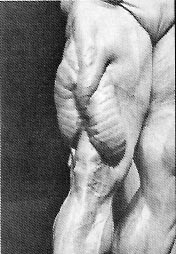 tom platz thighs