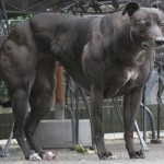 dog-muscle-009