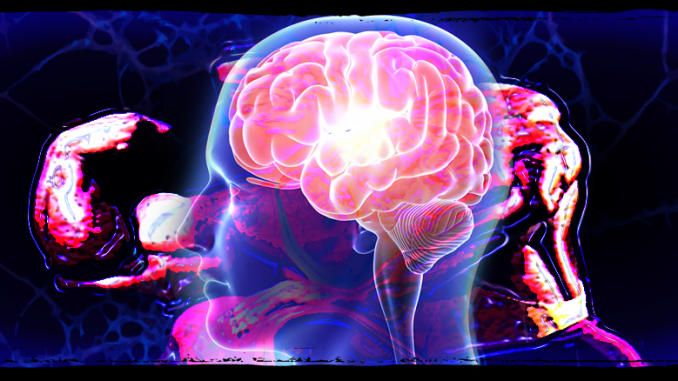 Exercise Builds Brain Plasticity
