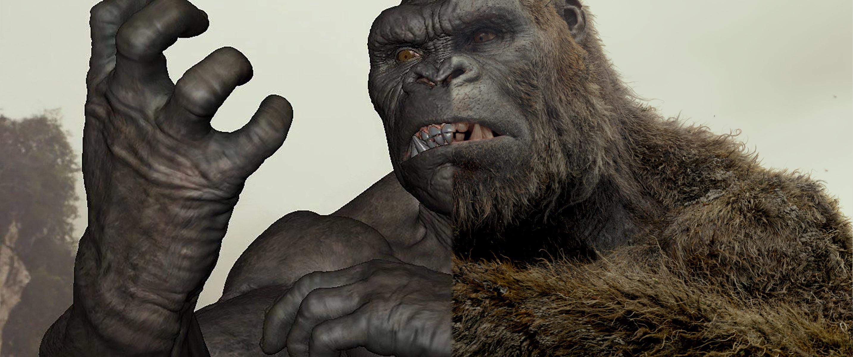 gorilla-anatomy_023